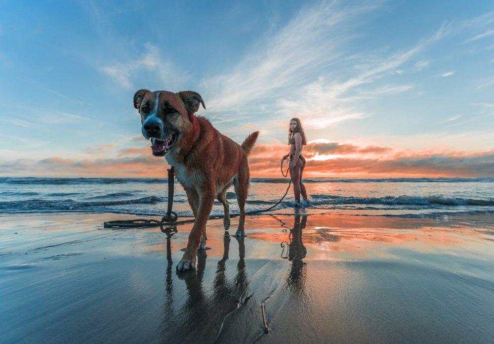 negative-space-woman-walking-dog-beach-sunrise-jacub-gomez.jpg
