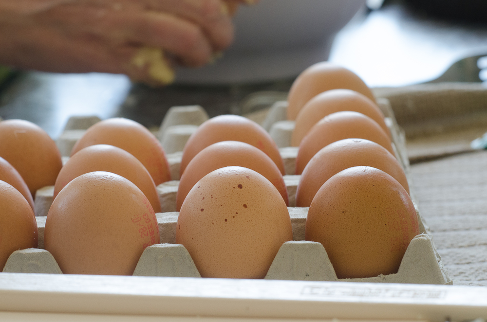 Happy chickens mean delicious eggs.  Vital Farms Eggs!