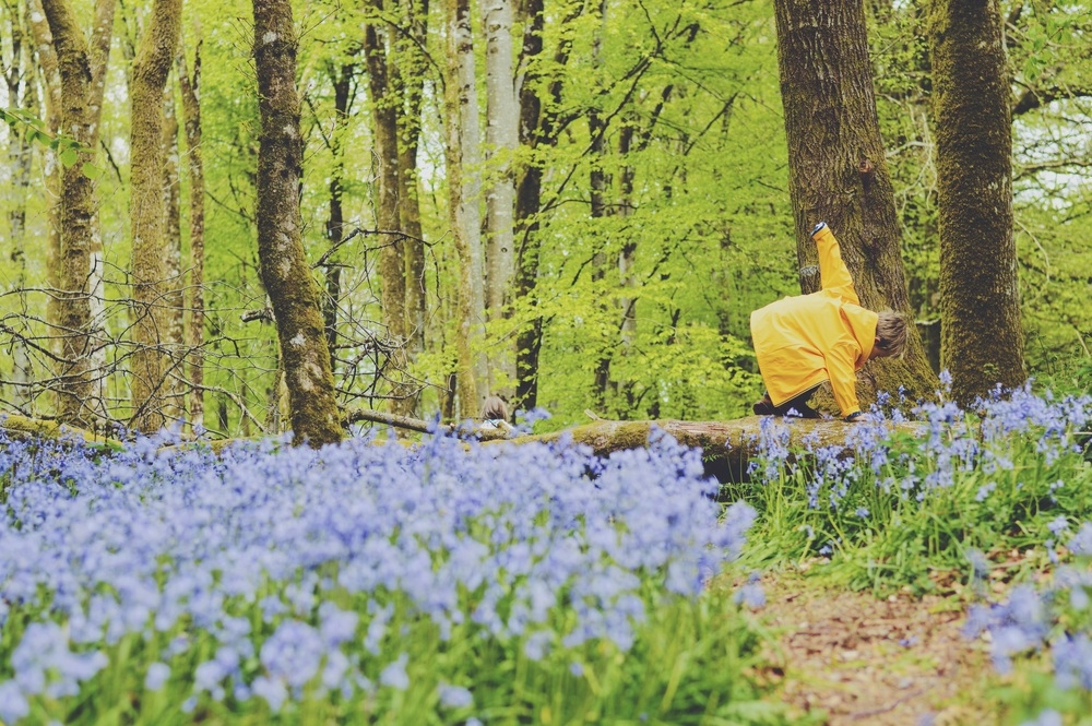 Exploring the bluebells in his Hatley raincoat.