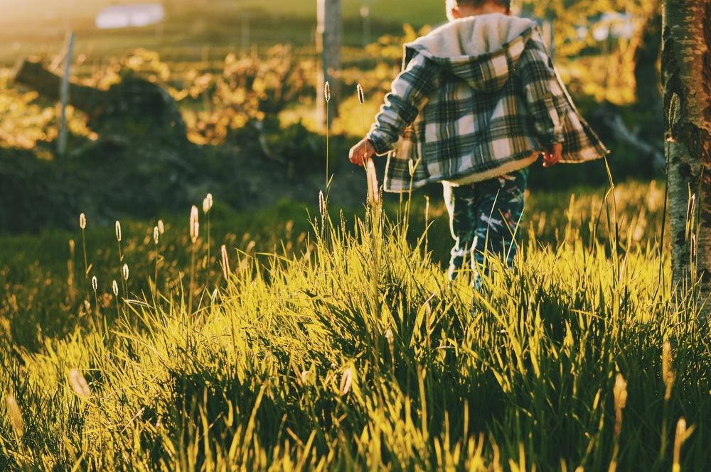 Run through a meadow