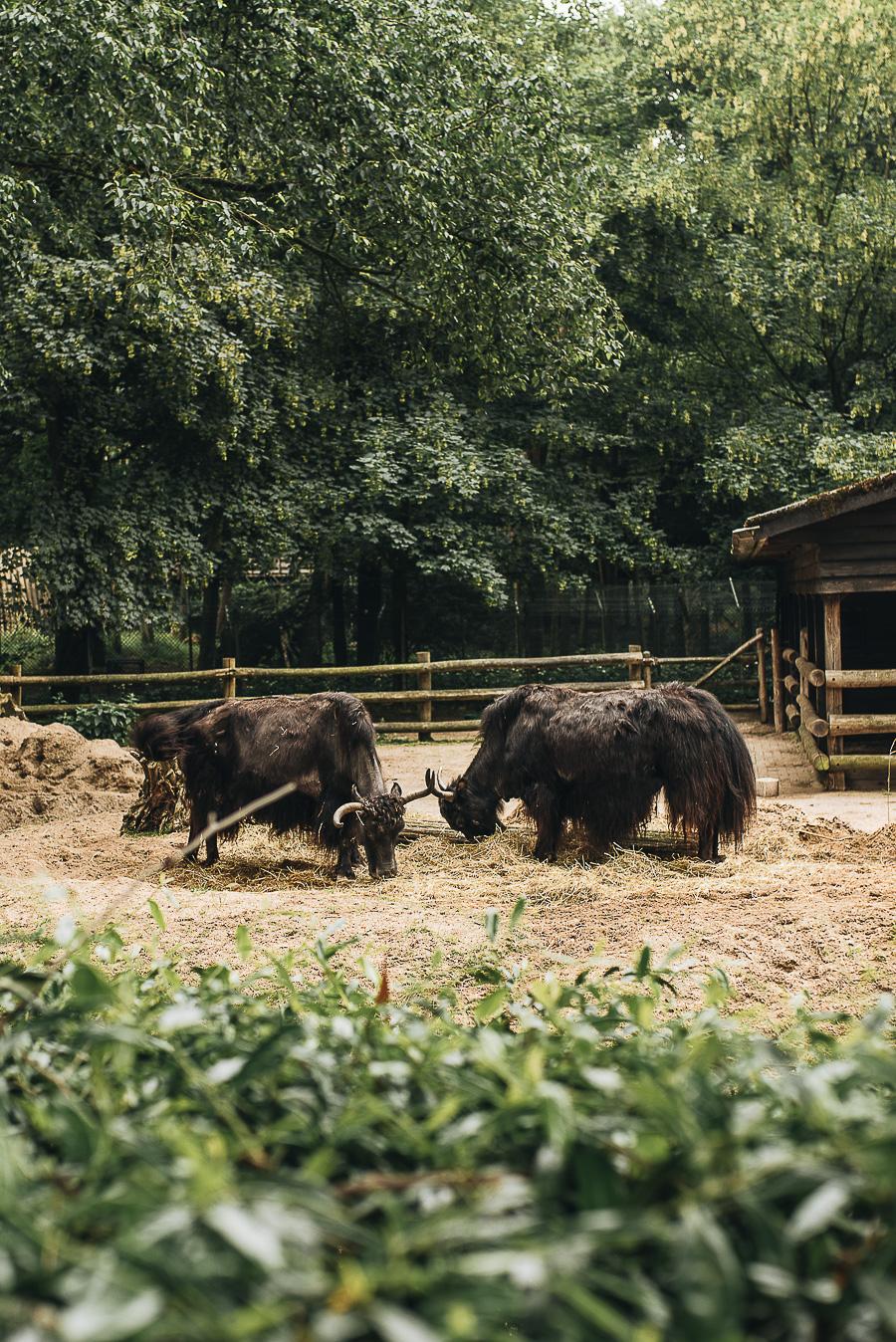 OurBeautifulAdventure-TravelBlog-OuwenhandsDierenpark-Holland-8548.jpg