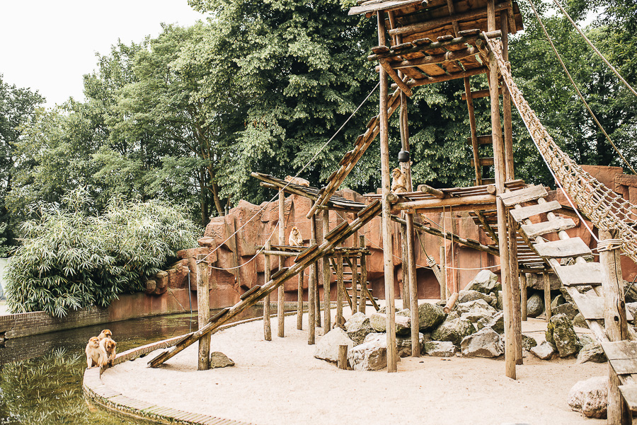 OurBeautifulAdventure-TravelBlog-OuwenhandsDierenpark-Holland-8562.jpg
