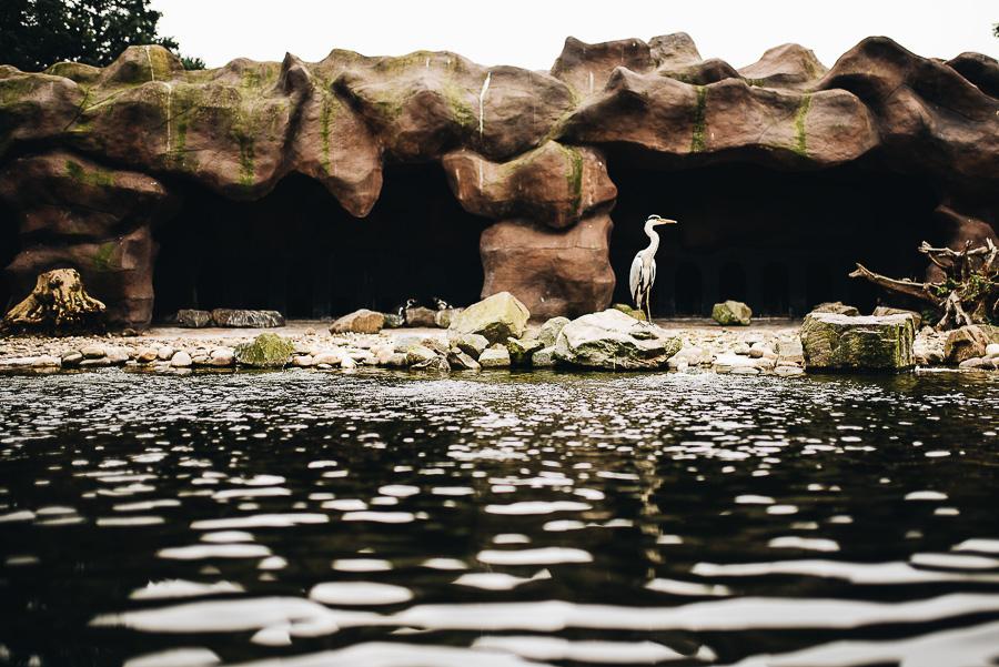 OurBeautifulAdventure-TravelBlog-OuwenhandsDierenpark-Holland-8588.jpg