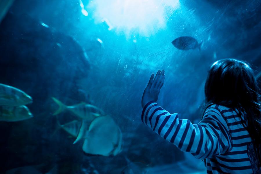 OurBeautifulAdventure-TravelBlog-SeaLifeCentre-Holland-9224-2.jpg