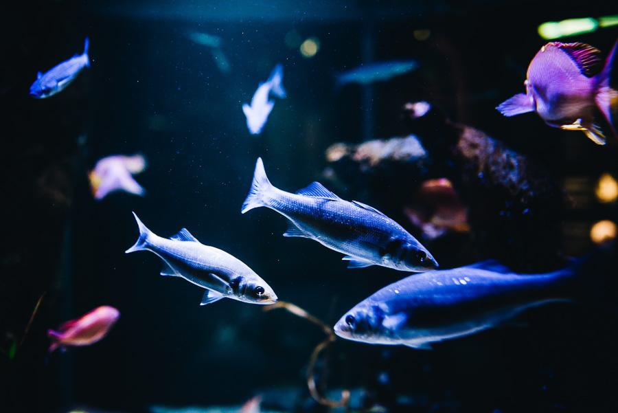 OurBeautifulAdventure-TravelBlog-SeaLifeCentre-Holland-9154.jpg