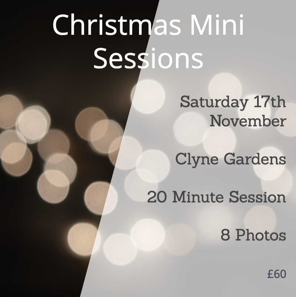 Christmas Sessions in the woods