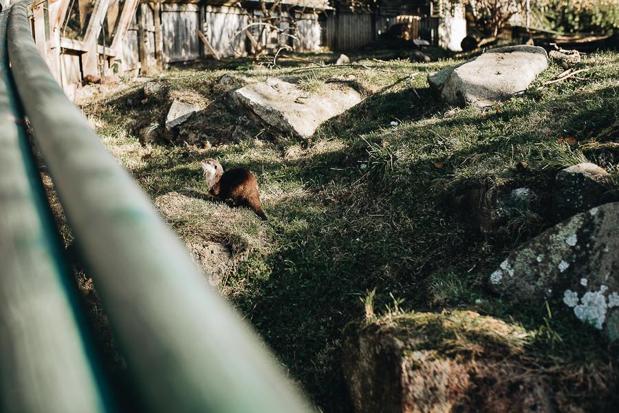 Spot the Otter.