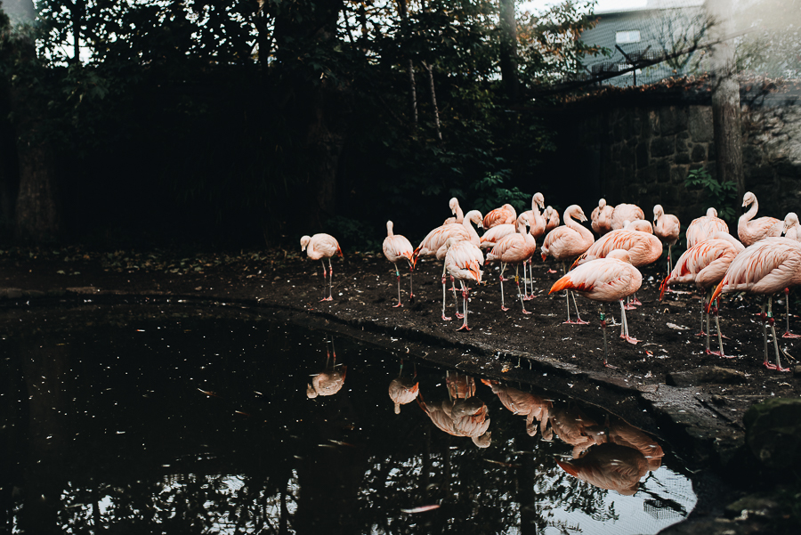 Flamingos; Ezra's 5th favourite animal apparently. When do you stop having a list of favourite animals I wonder?!