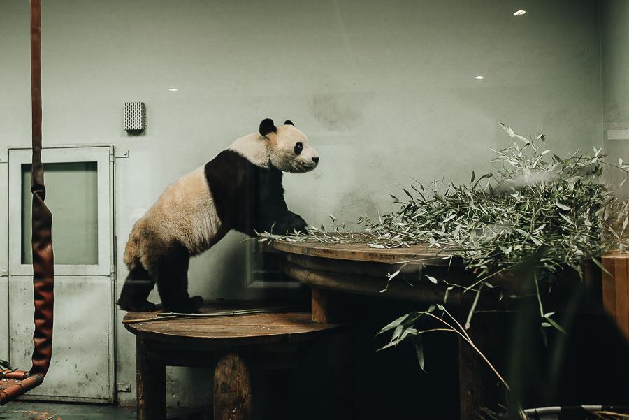 Edinburgh Zoo Blog - Visit Scotland - Our Beautiful Adventure