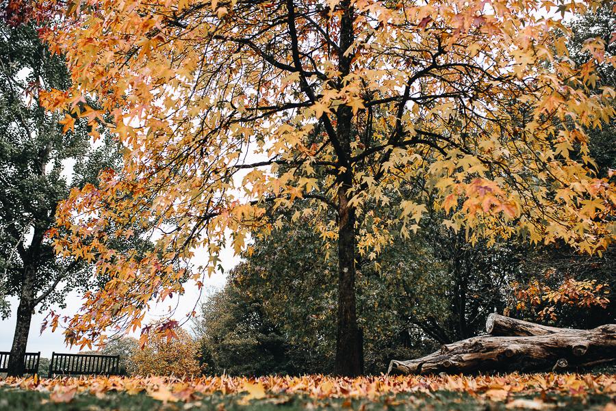 OurBeautifulAdventure-GettingOutdoorsinWales-October-websize-0154.jpg