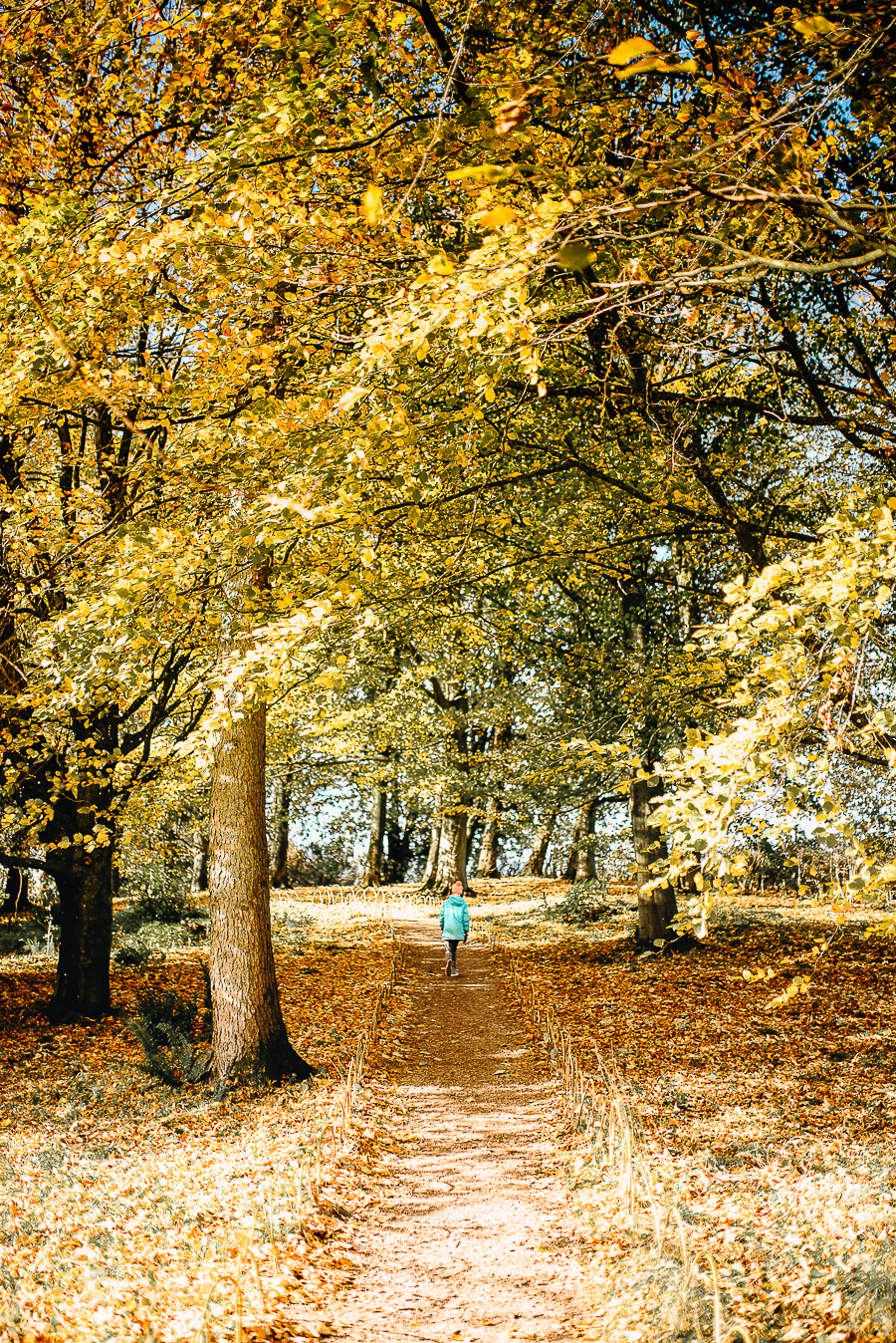 OurBeautifulAdventure-GettingOutdoorsinWales-October-websize-0315.jpg