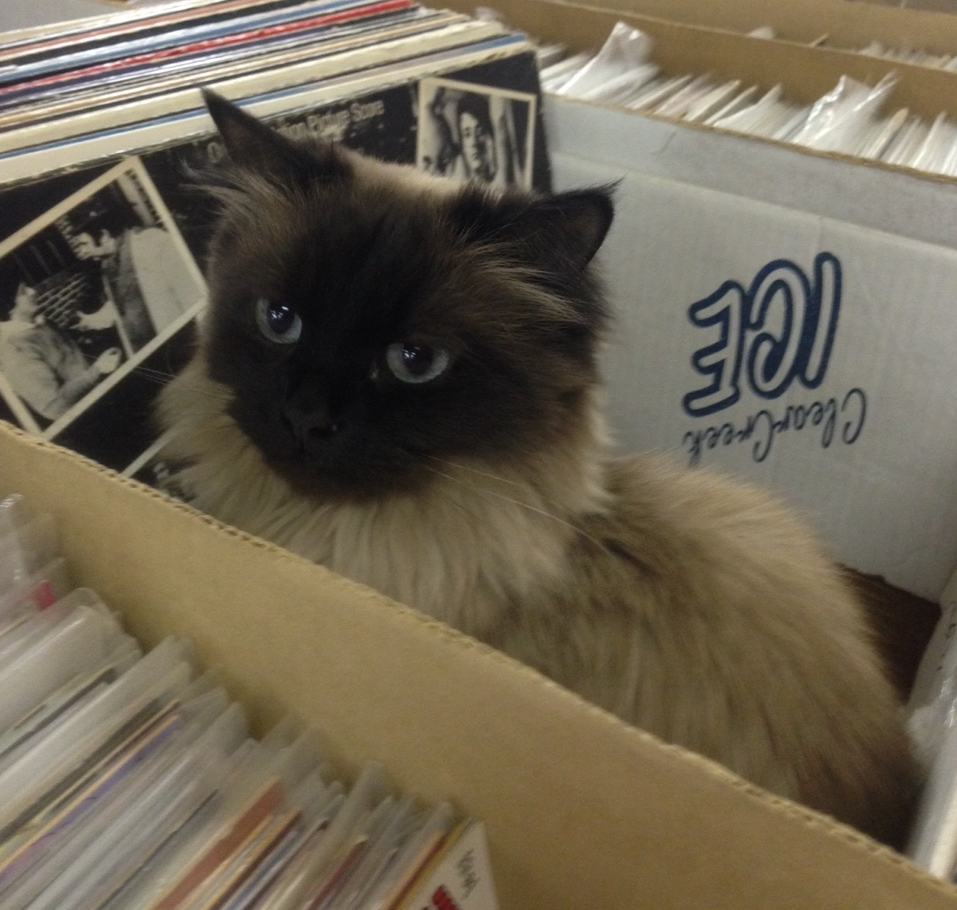 Fleur in Record Box