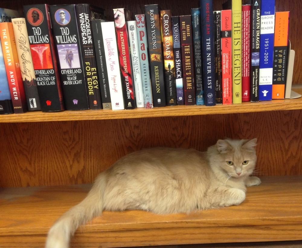 Bookshelf Cat
