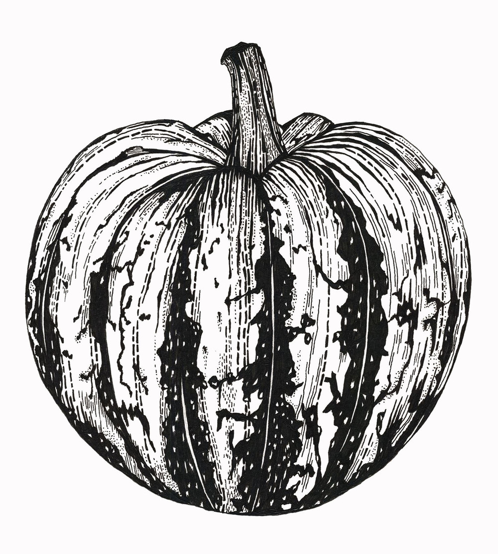 pumpkin scan.jpg