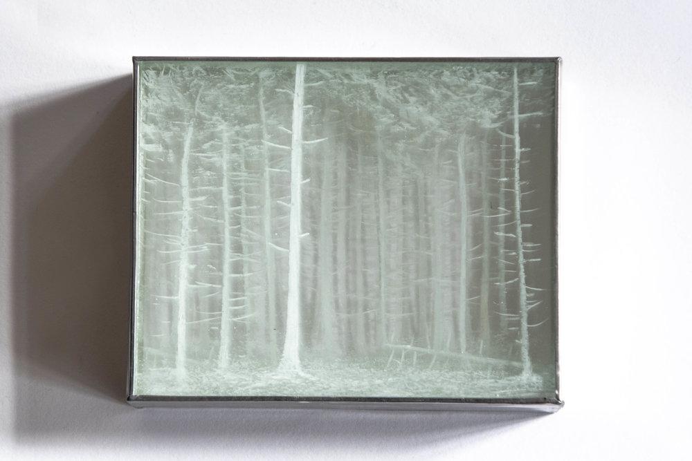 Francoise_Perronno-Forêt_sapin-2-vue2.JPG