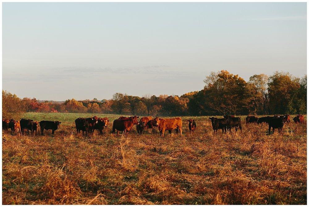 trent.and.kendra.photography.autumn.kentucky.foxhollow-48.jpg