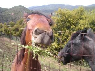 Hope Ranch Horsies.jpg
