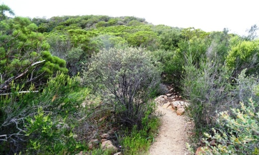 After twists, turns, rocks, crevices and hills, the trail flattens out a bit near the top.