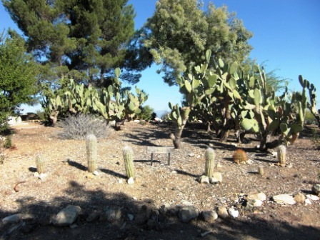 Desert Garden at the top of the hill, featuring cacti, succulents, etc.
