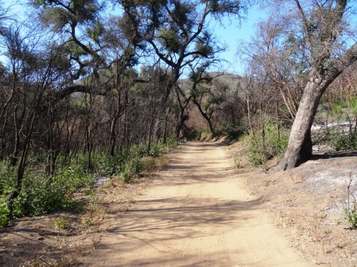 Trail runners' heaven is Wood Canyon Fire Road. I could run on trails like this any day.
