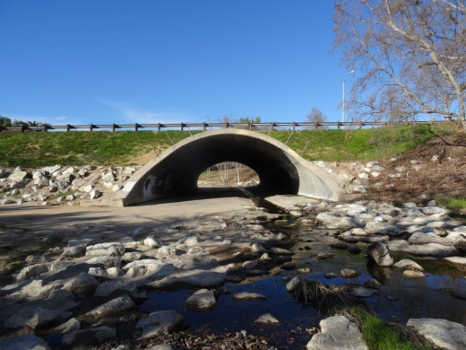Medea Creek runs through suburbia via this wash, where you will see some neat bird activity.