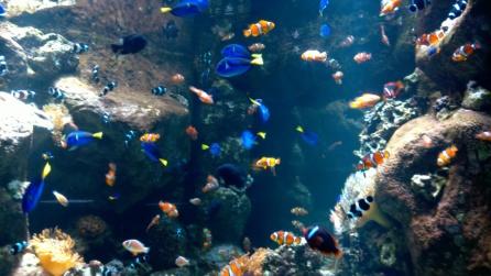 AquariumPacific1.jpg