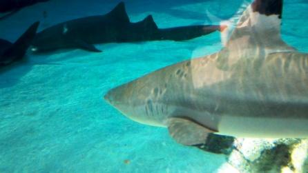 AquariumPacific6.jpg