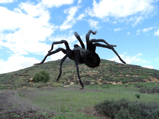 Gigantic tarantula on Tarantula Hill (Photo Credit: Ivana Getoudaheer)