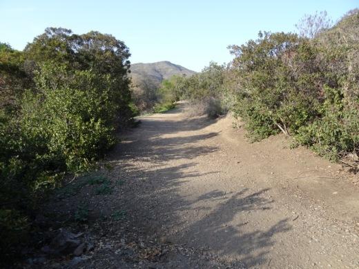 A trail at Camarillo Grove Park