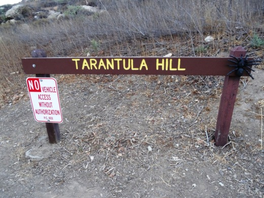 TarantulaHill080814_1.JPG