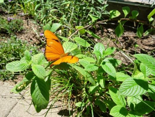 Santa Barbara Natural History Museum Summer Camps