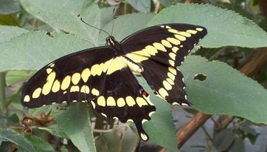 ButterfliesAlive1.jpg