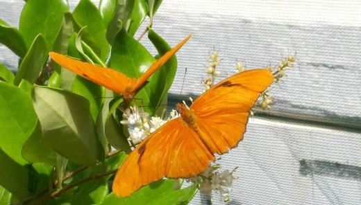 ButterfliesAlive5.jpg