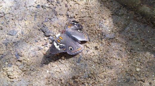 ButterfliesAlive6.jpg