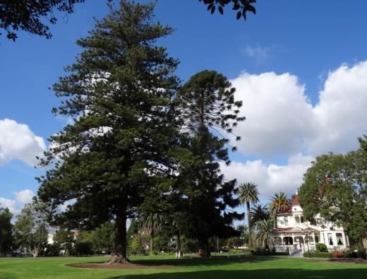 CamRanch_trees.JPG