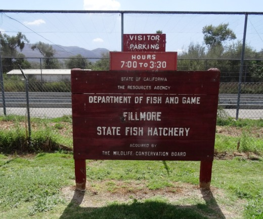 The Fillmore State Fish Hatchery Is A Fun Place To Visit With Kids Conejo Valley Guide