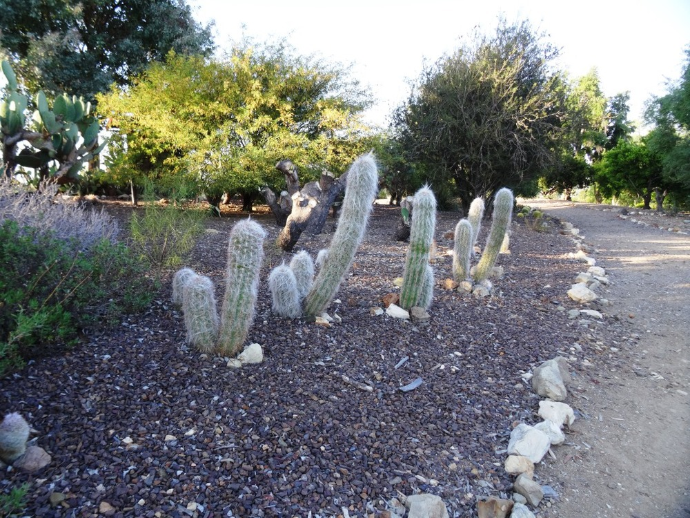 Interesting cactus display in the Desert Garden.