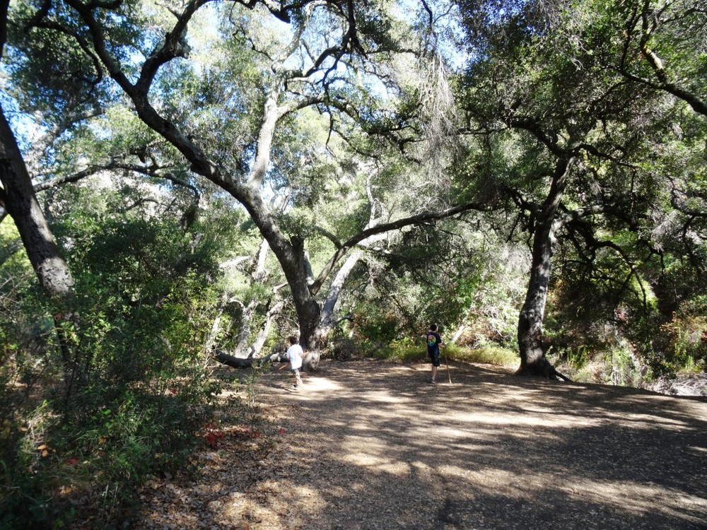 Eventually you'll reach this tree-lined area next to a creek that leads to the grotto area.