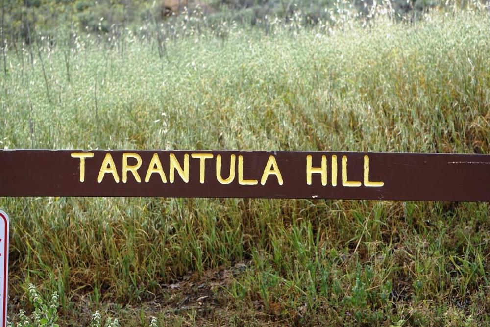 TarantulaHill2.JPG