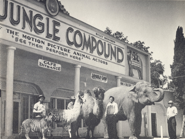 "In between Goebel's Lion Farm and Jungleland, from 1946 to 1955 the tourist destination was called the ""World Jungle Compound"" (Courtesy of CONEJO THROUGH THE LENS, THOUSAND OAKS LIBRARY.)"