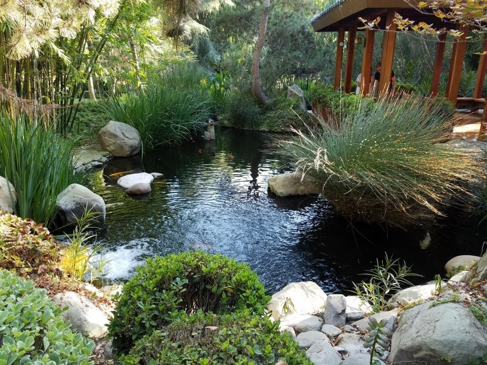 Koi ponds in and around ventura county and surrounding for Koi ponds and gardens