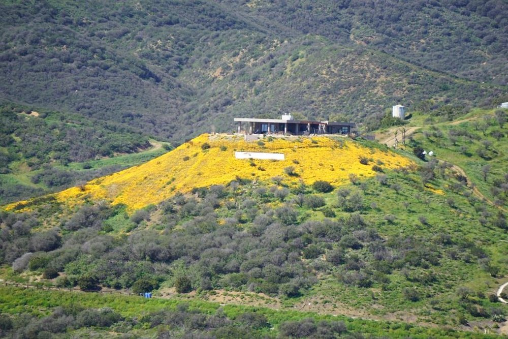 From Charmlee, I noticed this beautiful flower display on a hilltop home and had to take a pic and  post it to Instagram . Little did I know that this is apparently Caitlyn Jenner's hilltop home.