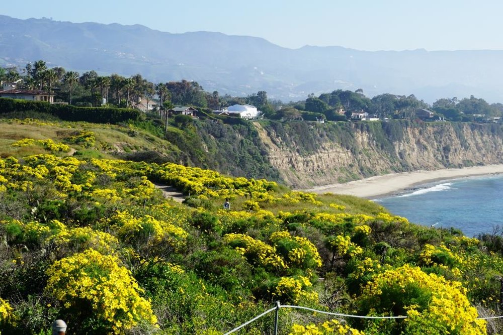 Springtime at the Point Dume Natural Preserve