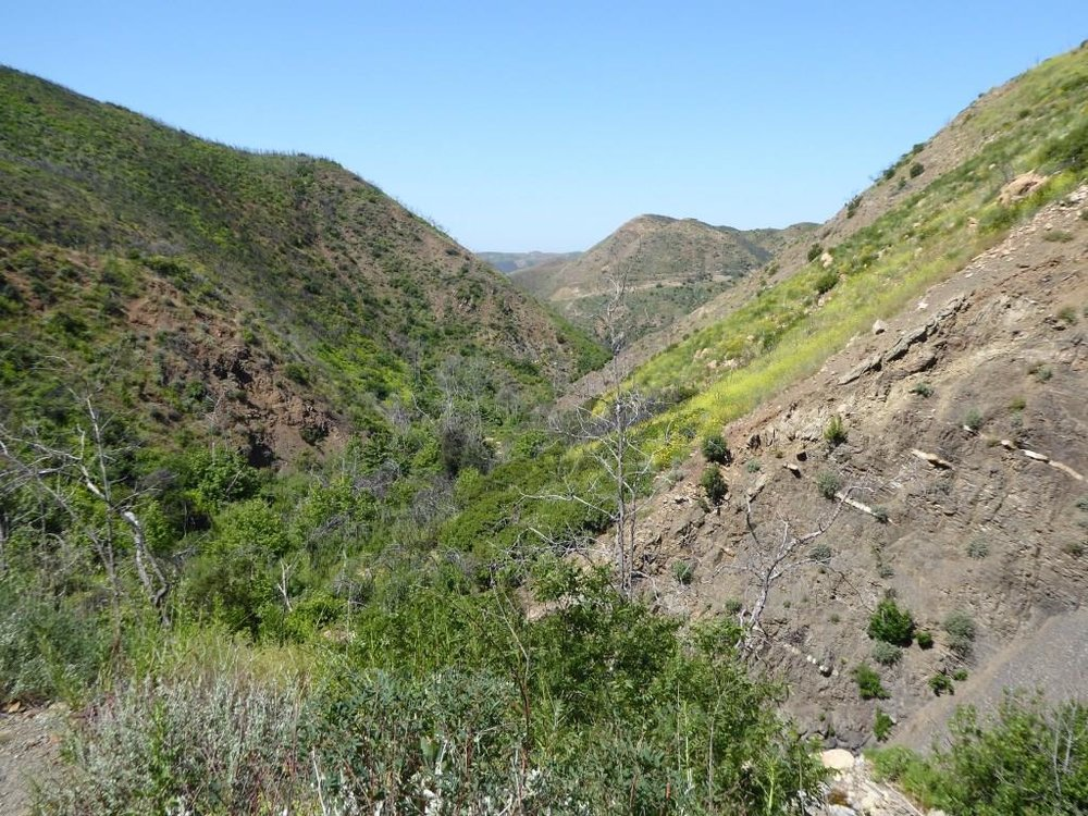 Inside the canyon, looking west, towards the Sycamore Canyon Fire Road.