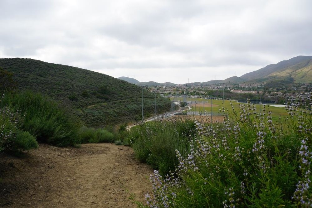 About 1/4 mile into the hike, looking back towards Del Prado Playfields.