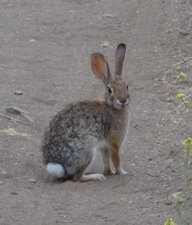 bunny2018.JPG