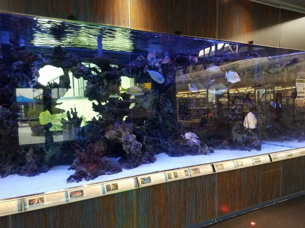 The 3,600 gallon saltwater aquarium.