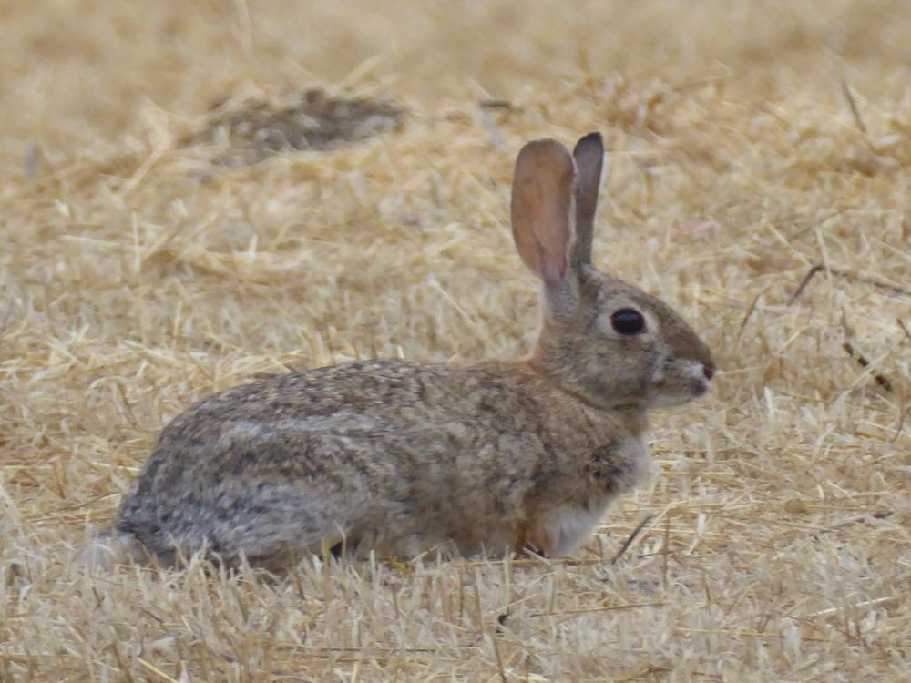 bunnyfacingwest.JPG