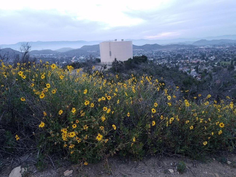 Views towards the water tank at top of Potrero Ridge Trail (middle section)