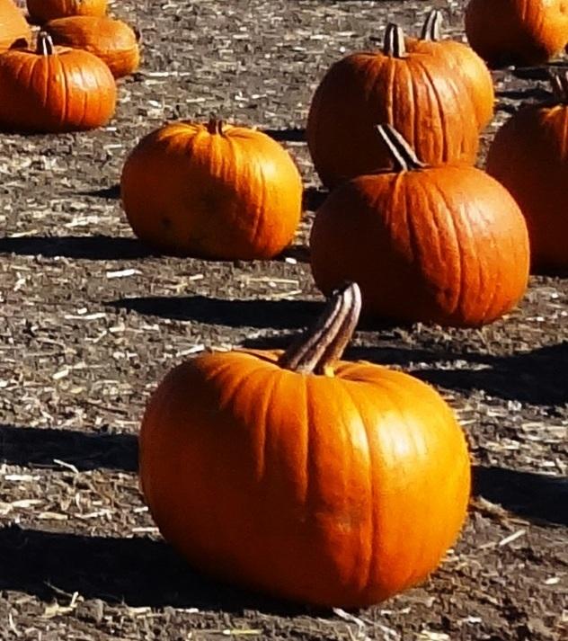 Pumpkins170.JPG